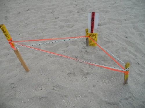Disney's Vero Beach Sea Turtle Nest