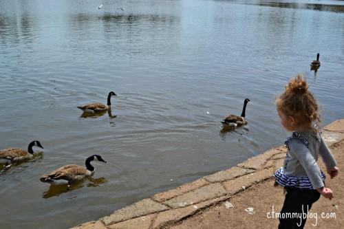 Hubbard Park Ducks