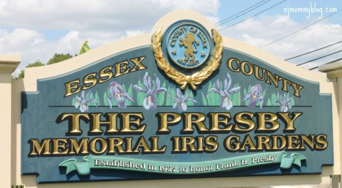 Presby Memorial Iris Gardens Montclair