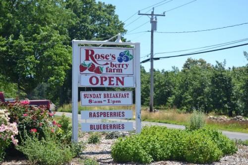 Rose's Berry Farm, South Glastonbury, CT