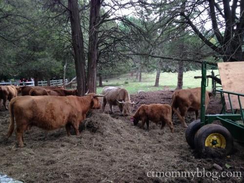 Karabin Farms, Southington CT
