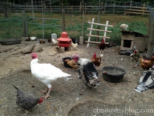 Karabin Farms Southington CT