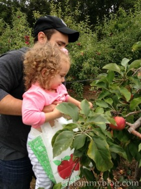 Apple Picking in Hartford County