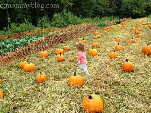 Pumpkin Picking at Karabin Farms