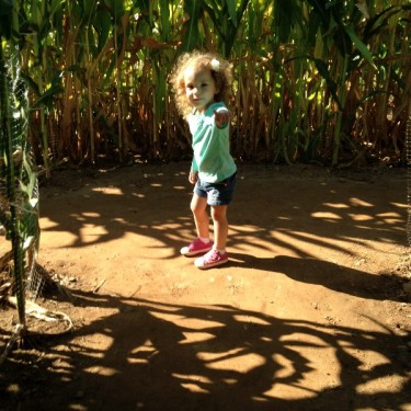 Lyman Orchards Corn Maze (37)