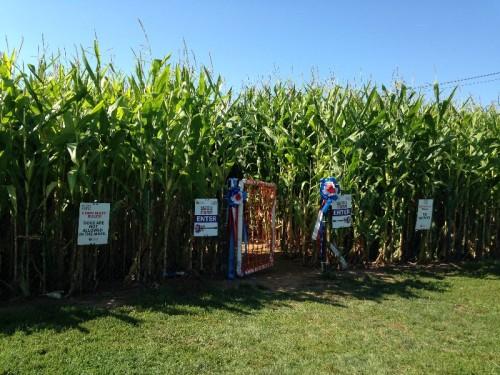 Lyman Orchards Corn Maze (8)