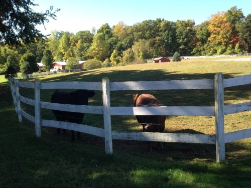 Cheshire Hollow Farm