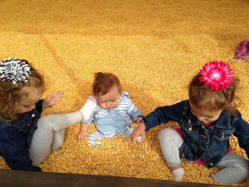 Fair Weather Acres Corn Pit