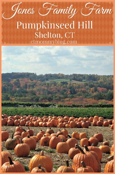 Pumpkin Picking in CT