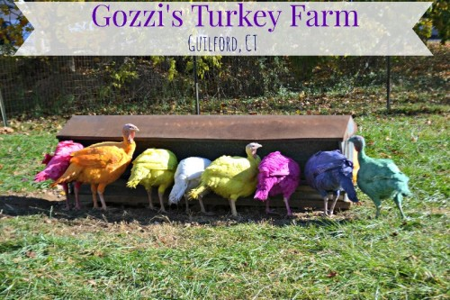 Things to do in CT: Gozzi's Turkey Farm in Guilford, CT
