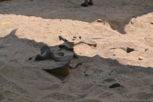 Lake Compounce Dinosaur Dig