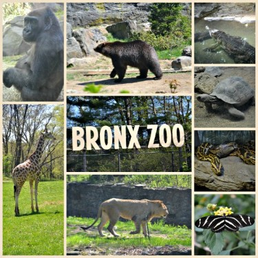 Day Trip Bronx Zoo