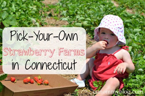 PYO Strawberry Farms CT