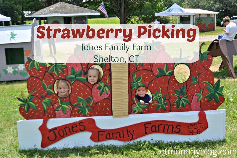 Strawberry Picking At Jones Family Farm In Shelton Ct Ct Mommy Blog