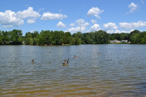 Paderewski Park Pond Plainville CT
