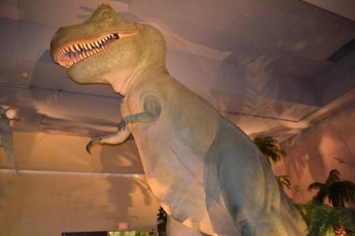 Dinosaur Hall Springfield Science Museum