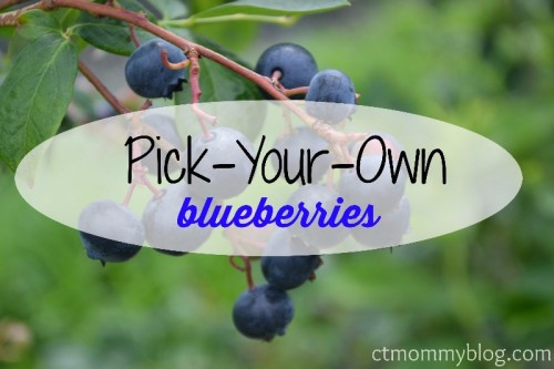 PYO Blueberry Farms in CT