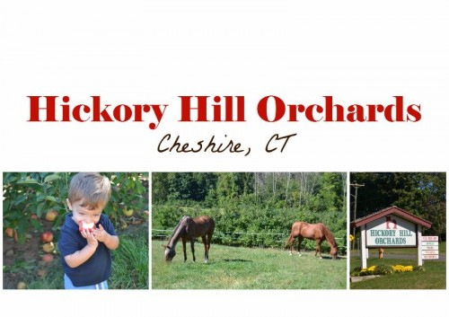 Hickory Hill Orchards in Cheshire CT