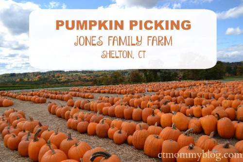 Pumpkin Picking Jones Farm Shelton, CT