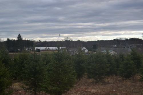 Christmas Tree Farms CT