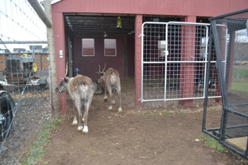 Reindeer Dzen Farm CT