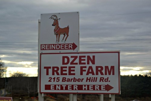 Reindeer Dzen Tree Farm CT