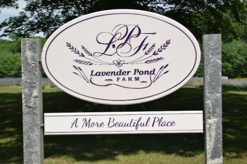 Lavender Pond Farm Killingworth CT