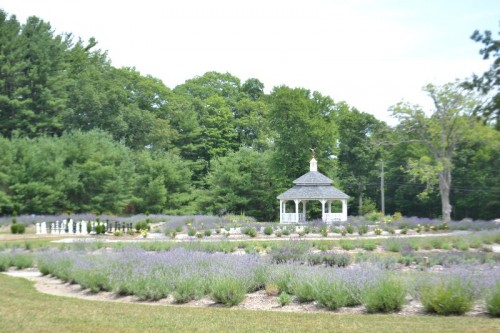 http://ctmommyblog.com/lavender-pond-farm-killingworth-ct/