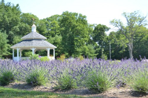 Lavender Pond Farm Killingworth, CT