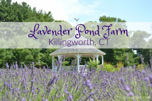 Lavender Pond Farm Killingworth, CT