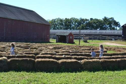 browns-harvest-windsor-ct-114