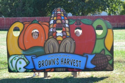 browns-harvest-windsor-ct-132