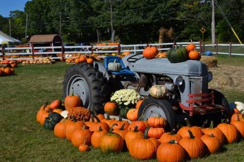 browns-harvest-windsor-ct-146