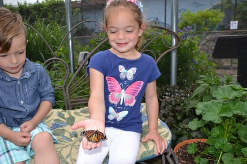 Butterfly Exhibit The Children's Museum West Hartford, CT