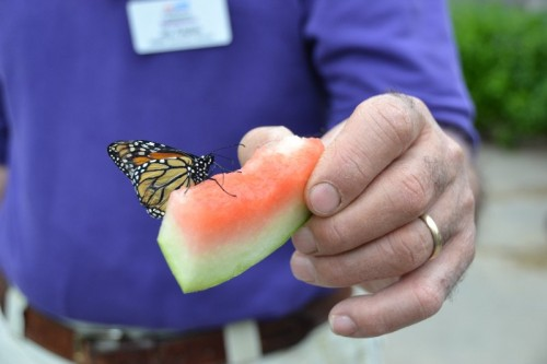 Butterfly Release The Children's Museum