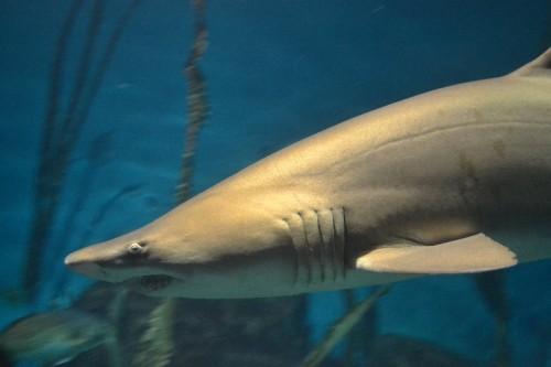 Maritime Aquarium Norwalk CT