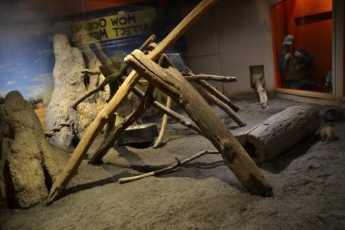 Meerkats Maritime Aquarium CT