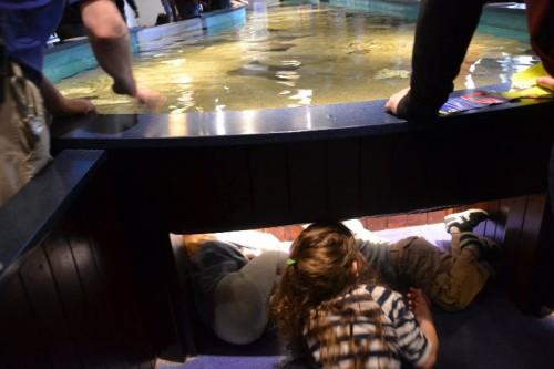 Maritime Aquarium CT