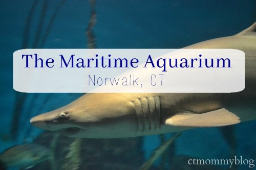The Maritime Aquarium Norwalk CT